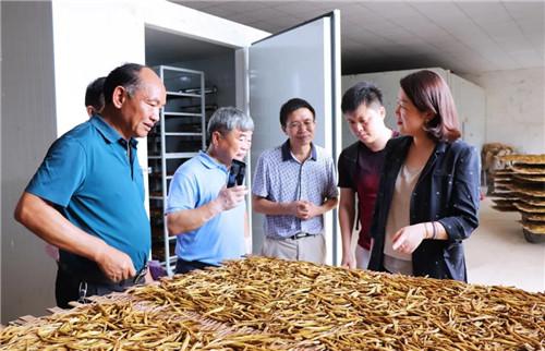 绿之韵黄花菜种植示范基地项目签约仪式举行